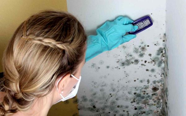 Грибок в ванной комнате как удалить